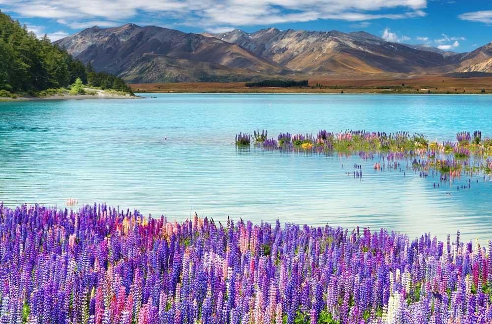 Lake Tekapo lupins wedding package